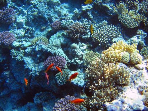 Corals are marine animals living in compact colonies of identical individual polyps. They mostly get their energy and nutrition from algae that live within the coral tissue