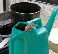 Strange home for a frog